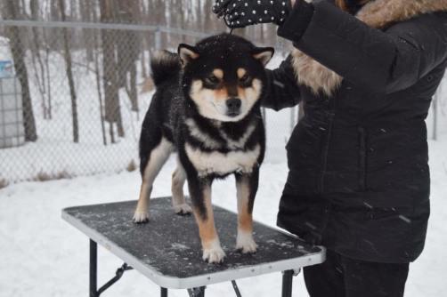 Cool J neige